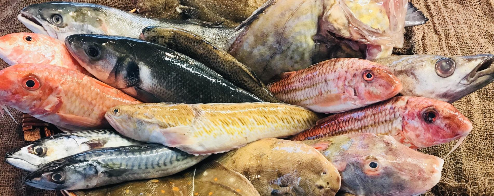 Vente en ligne de poissons, crustacés et coquillages fraichement